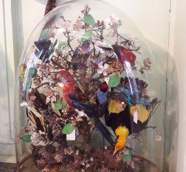 Totalement craquant, le muséum Emmanuel Liais de Cherbourg