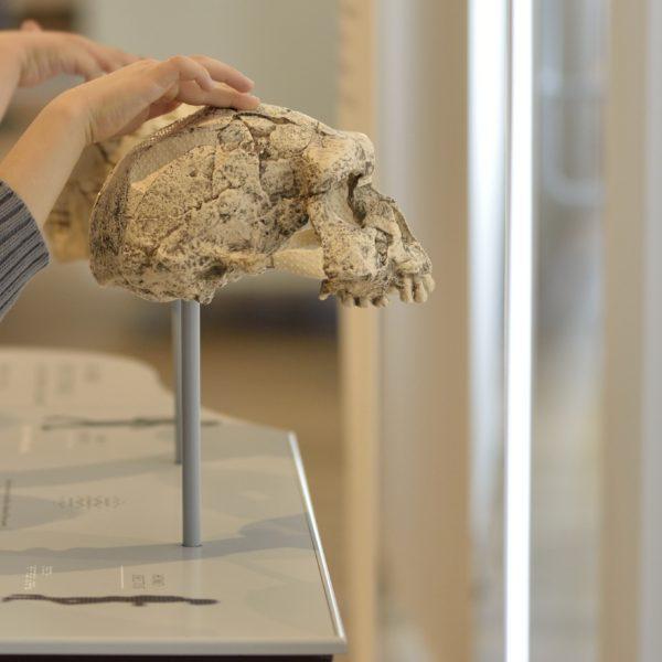 Comprendre qui nous sommes au Musée de l'Homme