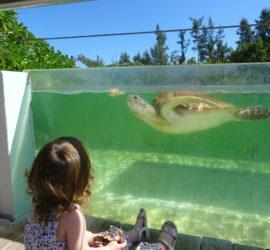 Les tortues, sous tous les angles…