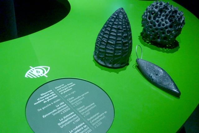 Plancton reproduit en 3D après agrandissement